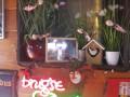 Sfeerbeelden-Café-Zeswege-31
